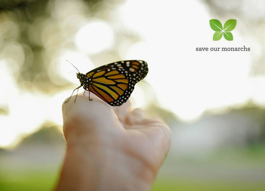 Save Our Monarchs
